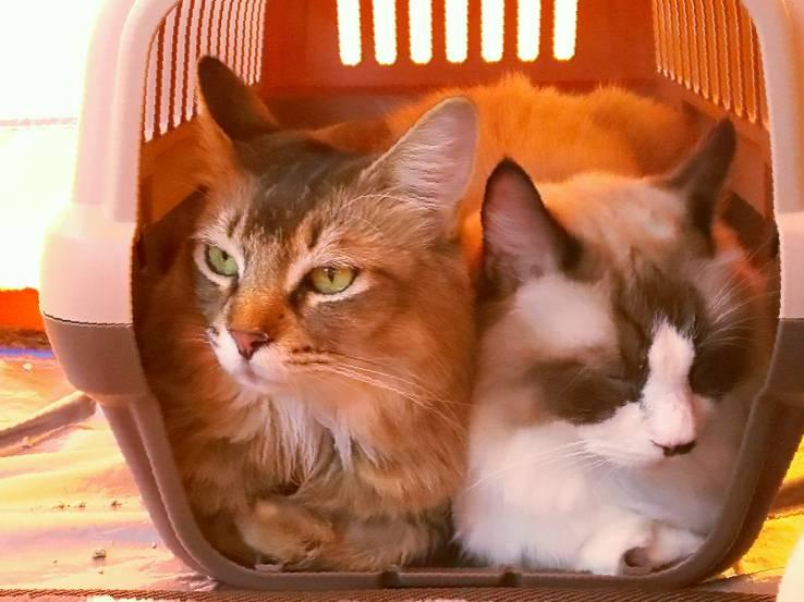 猫の「ひなたぼっこ」